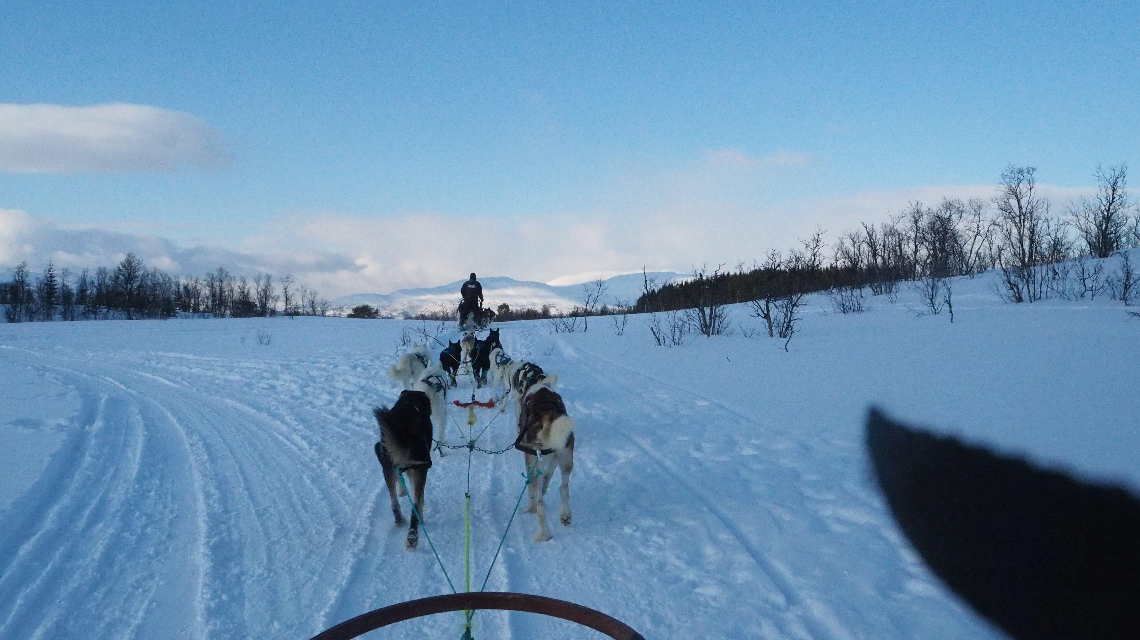 Huskytour in Tromsø