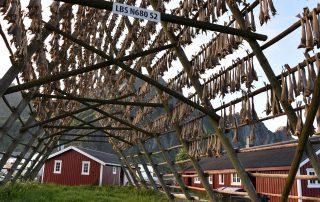 Fischgestelle in Svolvær