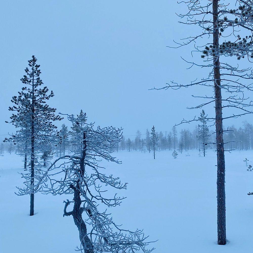 Winterwochenende Finnisch-LAppland