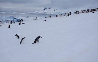 Pinguine in der Gruppe