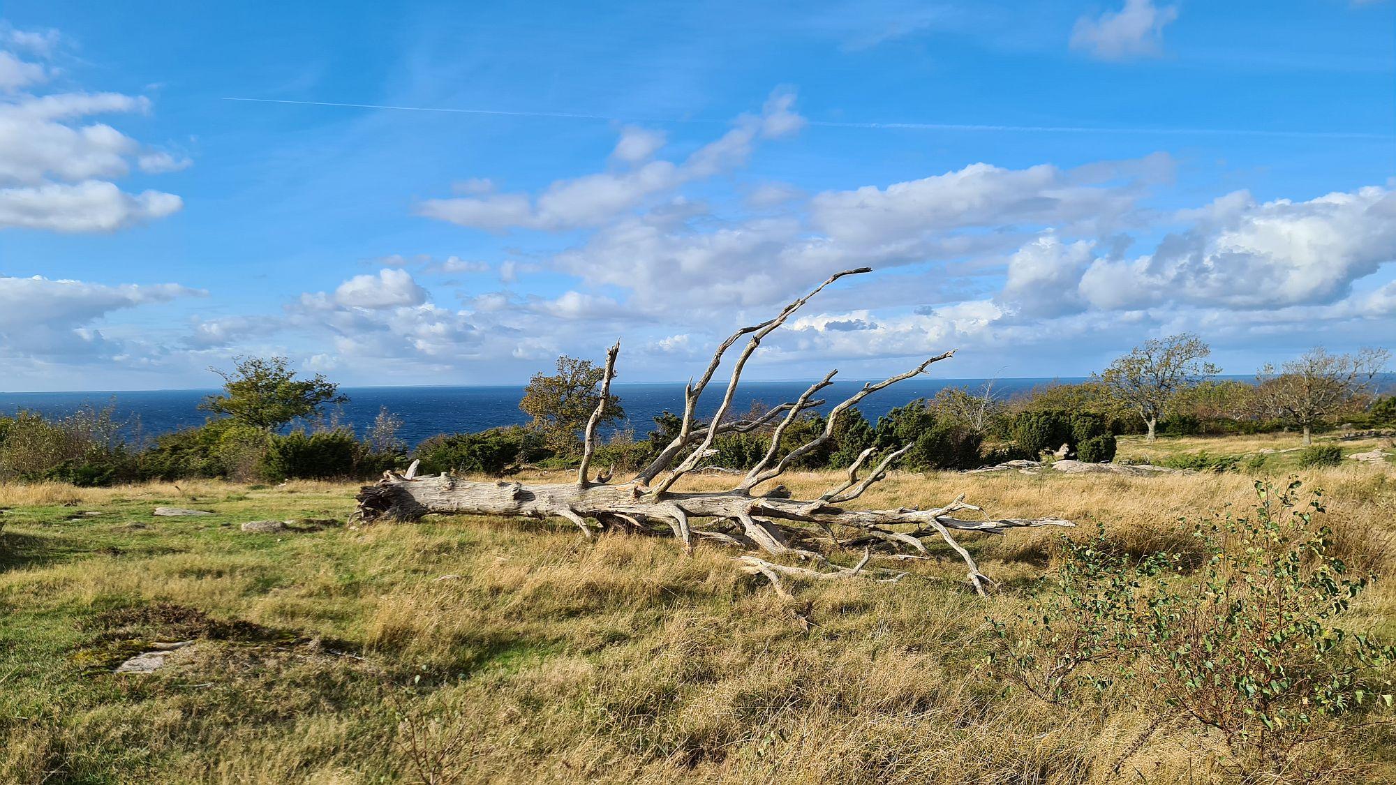 Toter Baum in Hammerknuden