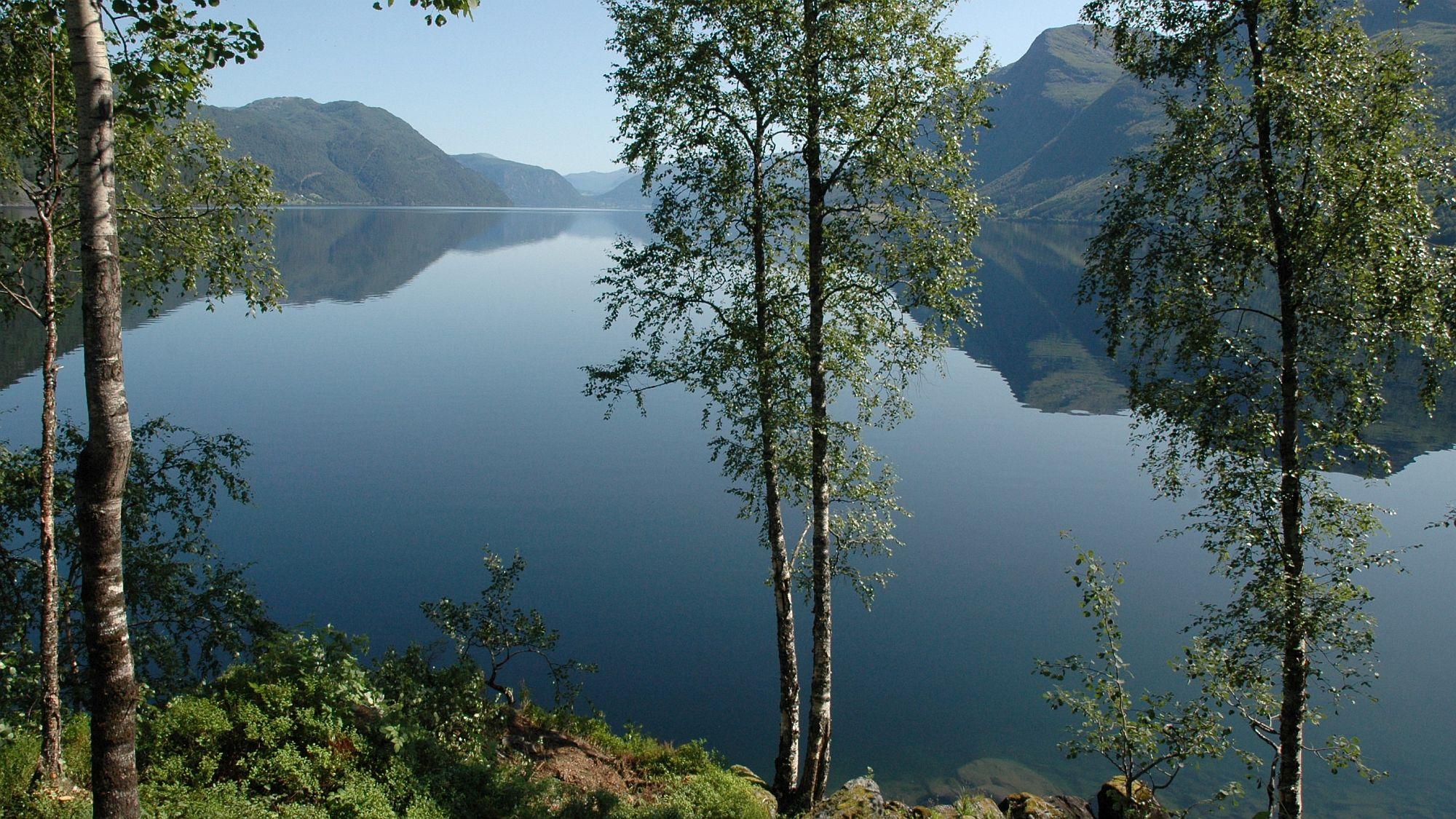 Waldiges Fjordufer